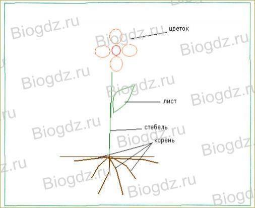 Тема 8. Транспорт веществ в организме - 1