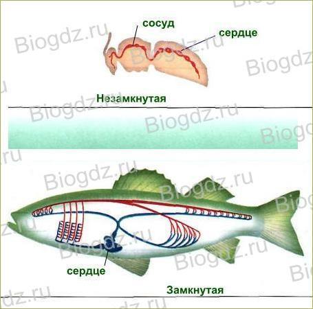 Тема 8. Транспорт веществ в организме - 2