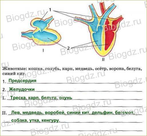 Тема 8. Транспорт веществ в организме - 4