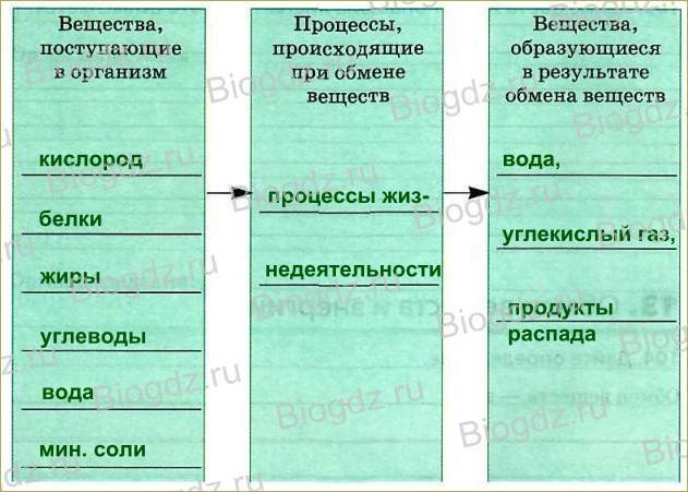 Тема 10. Обмен веществ и энергии - 1