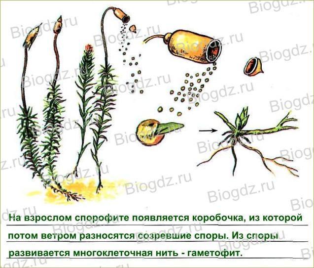 Тема 16. Половое размножение растений - 2