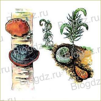 Тема 19. Организм как единое целое - 1