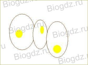 3. Строение растительной и животной клеток - 7