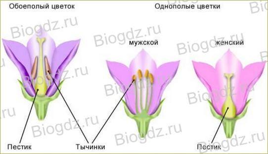 6. Органы цветковых растений - 18