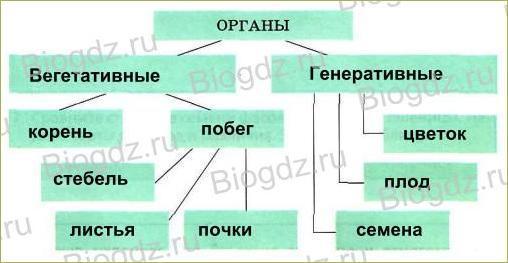 6. Органы цветковых растений - 22
