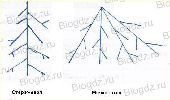 6. Органы цветковых растений - 3
