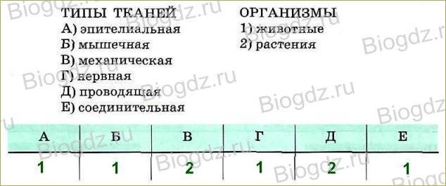 Тренировочные задания (1 ч) - 1
