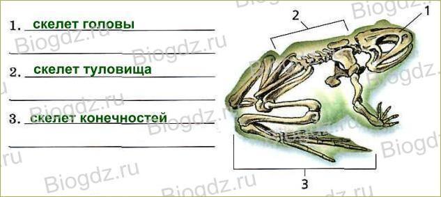 14. Скелет — опора организма - 4