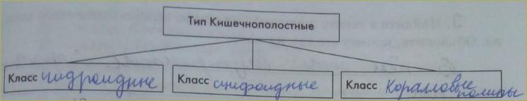 6. Тип кишечнополостные - 2