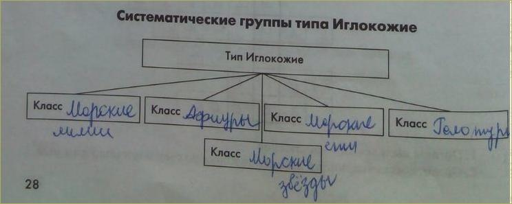 13. Тип Иглокожие - 1