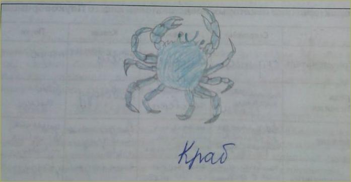 14. Тип членистоногие - 1