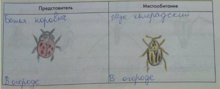 17. Отряды насекомых. Стрекозы, Вши, Жуки, Клопы - 1