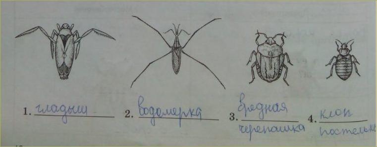 17. Отряды насекомых. Стрекозы, Вши, Жуки, Клопы - 2