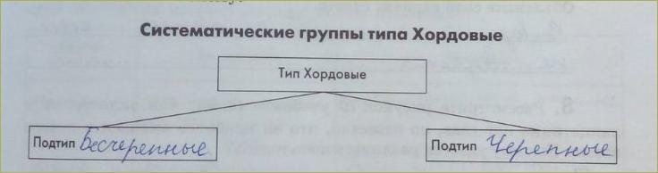 20. Тип Хордовые. Подтипы: Бесчерепные и Черепные, или Позвоночные - 1