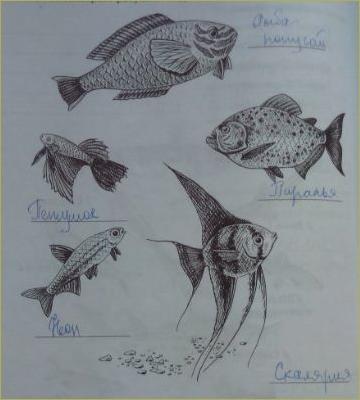 23. Отряд Костные рыбы. Отряды: Осетрообразные, Сельдеобразные, Лососеобразные, Карпообразные, Окунеобразные - 4