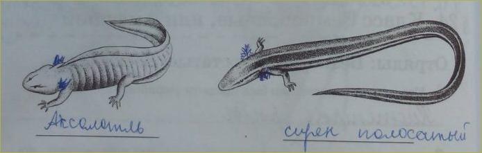 24. Класс Земноводные, или Амфибии - 2