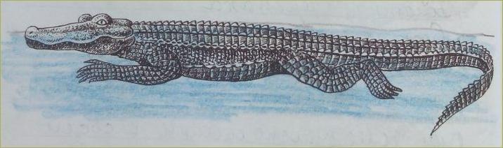 26. Отряды пресмыкающихся. Черепахи, Крокодилы - 1