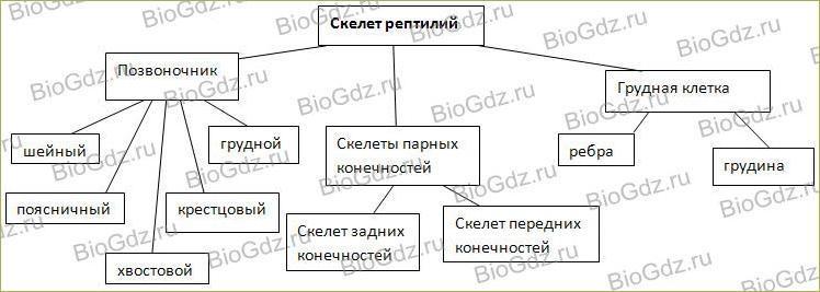 37. Опорно-двигательная система - 3