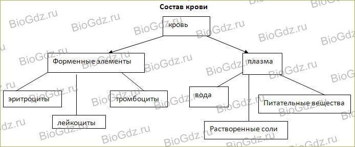 41. Кровеносная система. Кровь - 4