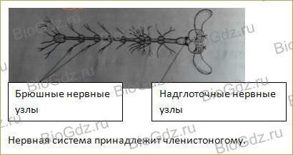 43. Нервная система. Рефлекс. Инстинкт - 2