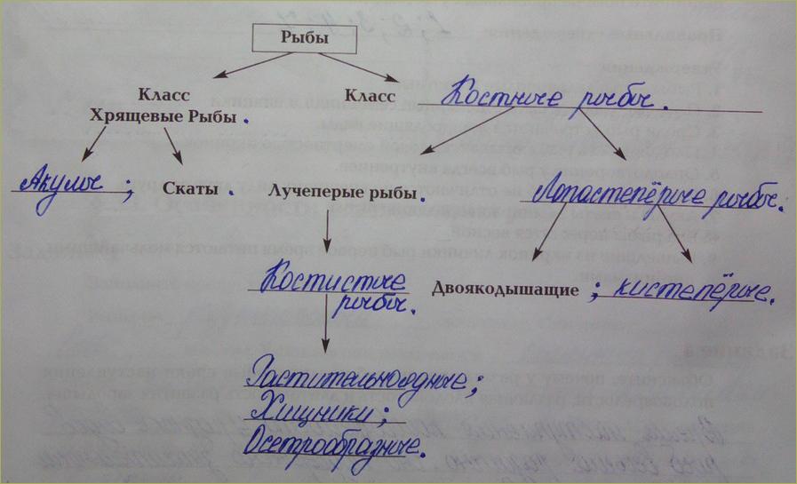 §34. Основные систематические группы рыб - 1