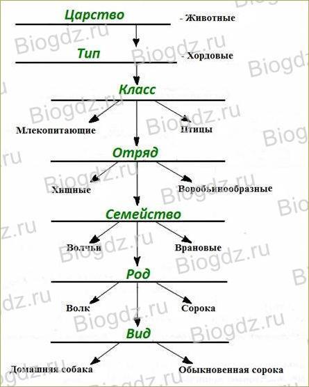 §3. Классификация животных и основные систематические группы - 1