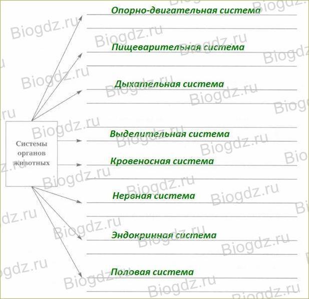 §8. Органы и системы органов - 1