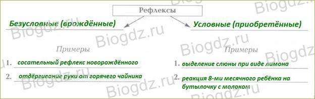 §8. Органы и системы органов - 3