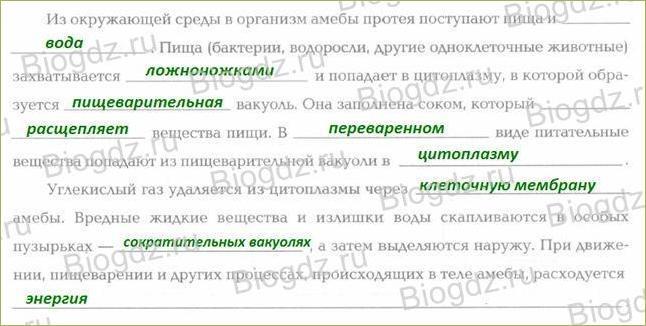 §9. Тип Саркодовые и жгутиконосцы. Класс Саркодовые - 3