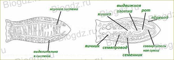 §15. Тип Плоские черви - 1