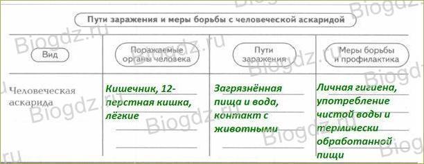 §17. Тип Круглые черви - 5