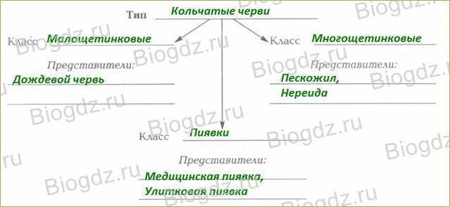 §19. Тип Кольчатые черви. Класс Малощетинковые черви - 2
