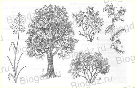 14. Отдел Покрытосеменные (Цветковые) растения - 1