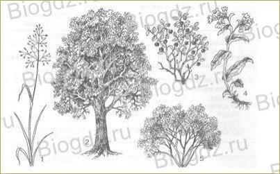 14. Отдел Покрытосеменные (Цветковые) растения - 2