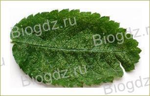 14. Отдел Покрытосеменные (Цветковые) растения - 3