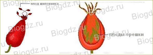 14. Отдел Покрытосеменные (Цветковые) растения - 5