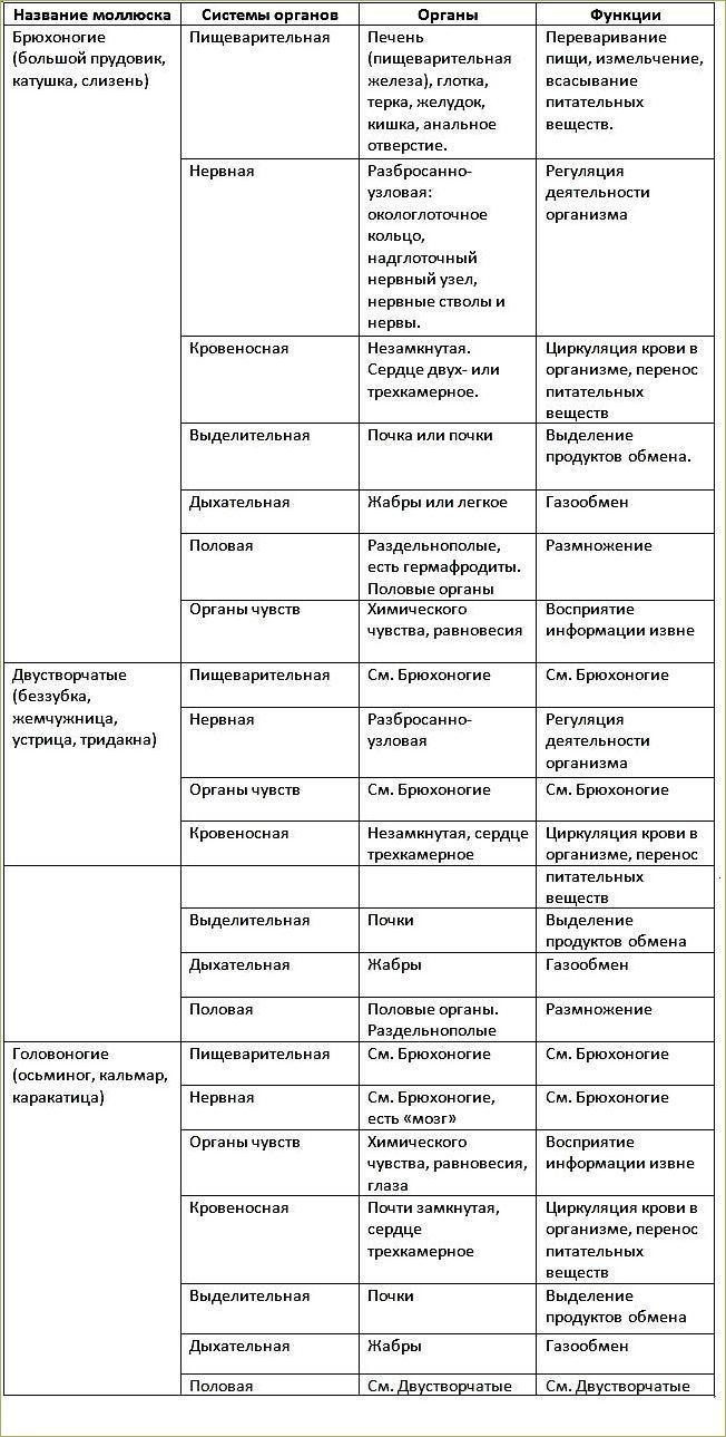 26. Тип Моллюски - 2