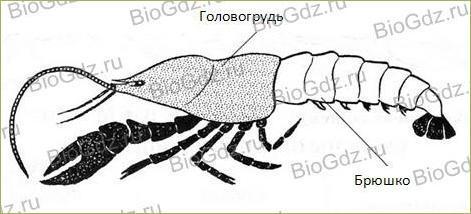 28. Тип Членистоногие. Класс Ракообразные - 1