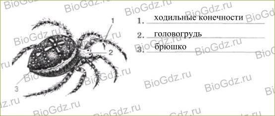 29. Класс Паукообразные - 1