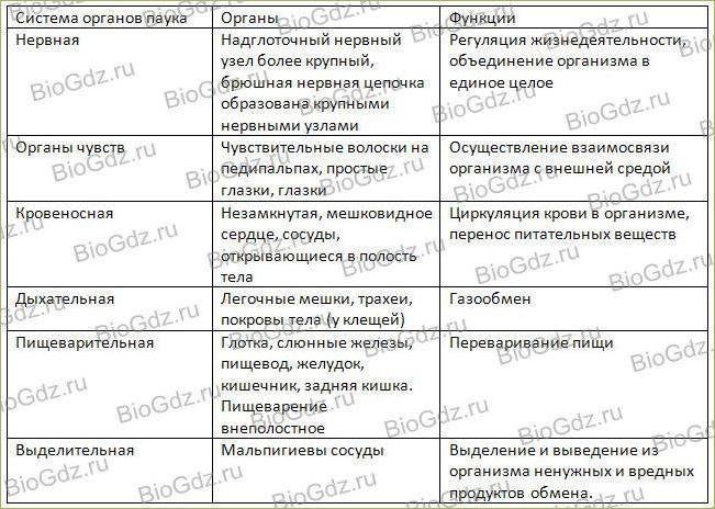 29. Класс Паукообразные - 3