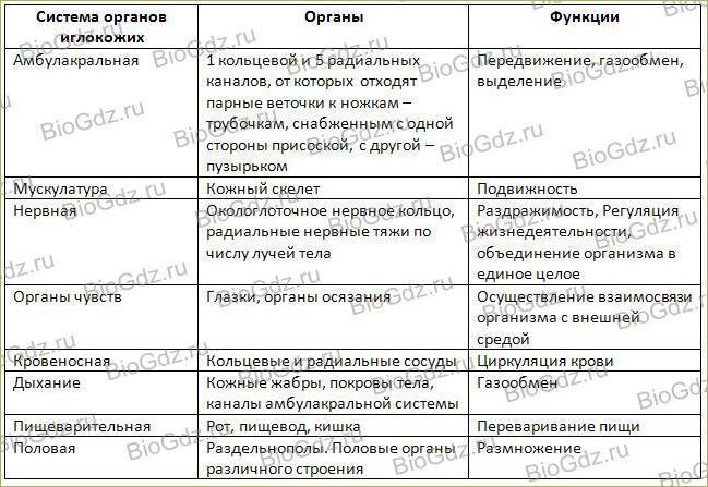32. Тип Иглокожие - 2