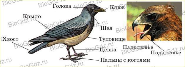38. Класс Птицы - 1