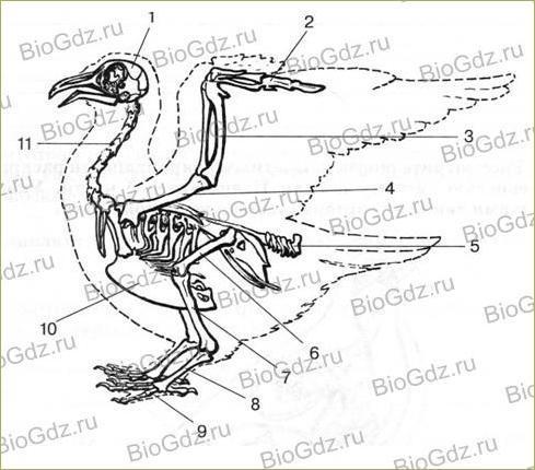 38. Класс Птицы - 3