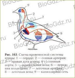 38. Класс Птицы - 4