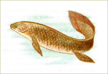 §34. Основные систематические группы рыб - 2