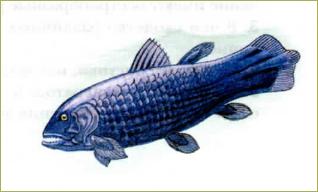 §34. Основные систематические группы рыб - 3