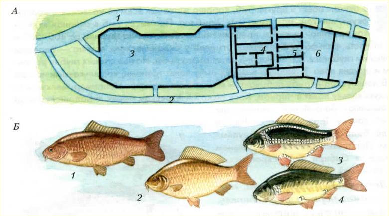 §35. Промысловые рыбы. Их использование и охрана - 1