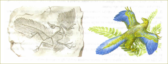 50. Значение и охрана птиц. Происхождение птиц - 1