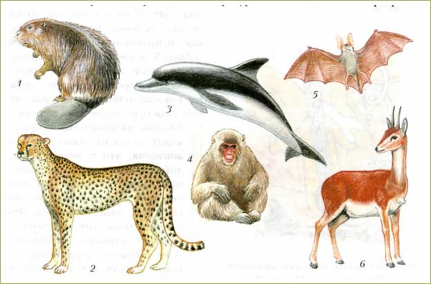 51. Внешнее строение млекопитающих. Среды жизни и места обитания - 1
