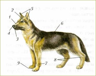 51. Внешнее строение млекопитающих. Среды жизни и места обитания - 2